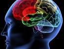 Cerveau artificiel : l'informatique au service de la science
