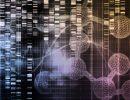 Recherche : le développement de la production d'embryons