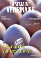 Sites de notation des vétérinaires : quelle stratégie adopter ?